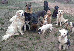 photo promenade éducative collective chien sociable en liberté éducateur canin nord